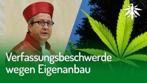 Verfassungsbeschwerde wegen Eigenanbau | DHV-News #253