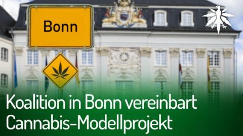 Koalition in Bonn vereinbart Cannabis-Modellprojekt | DHV-News #279
