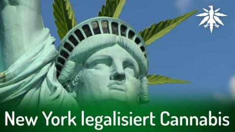 New York legalisiert Cannabis | DHV-News # 287