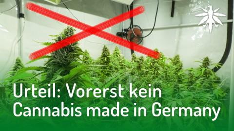 Urteil: Vorerst kein Cannabis made in Germany | DHV-News #159