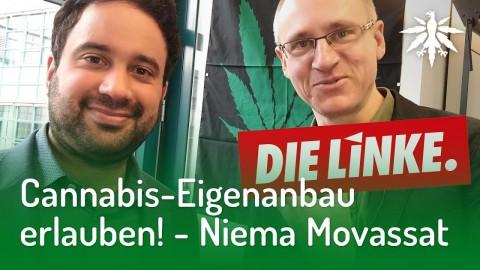 Niema Movassat: DIE LINKE & Cannabis