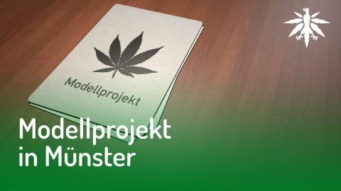 Münster reicht Antrag für Cannabis-Modellprojekt ein | DHV News #132