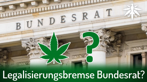 Ist der Bundesrat ein Problem für die Legalisierung? | DHV-News # 312