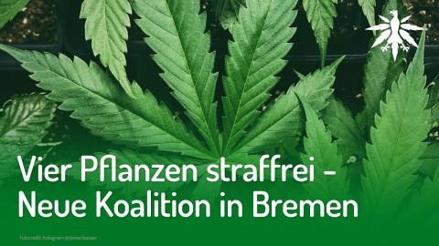 Vier Pflanzen straffrei - Neue Koalition in Bremen | DHV-News #211