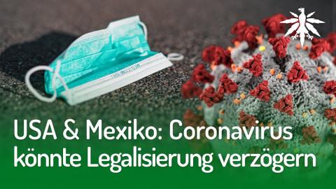 USA & Mexiko: Coronavirus könnte Legalisierung verzögern | DHV-News #243