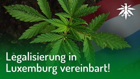 Legalisierung in Luxemburg vereinbart! | DHV-News #186