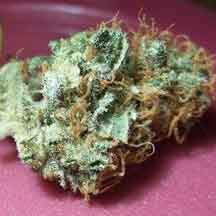 Ungepresstes Marihuana, Foto by Hanfburg