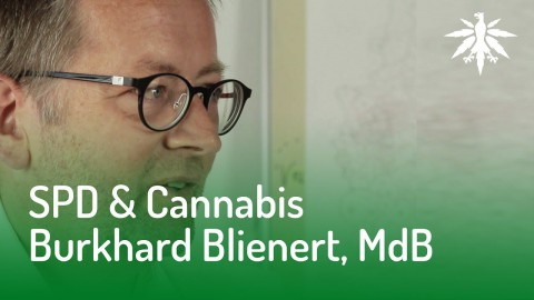 SPD & Cannabis? Interview mit Burkhard Blienert