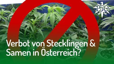 Verbot von Stecklingen & Samen in Österreich? | DHV News #150
