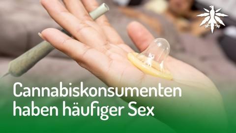 Cannabiskonsumenten haben häufiger Sex | DHV News #143