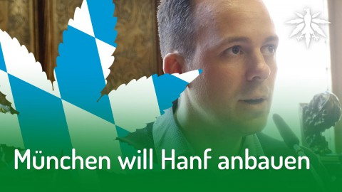 München will Hanf anbauen | DHV-News #205