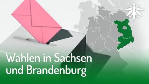 Wahlen in Sachsen und Brandenburg | DHV-News #215