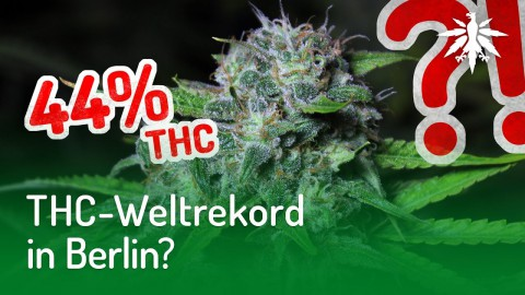 THC-Weltrekord in Berlin? | DHV-News #177
