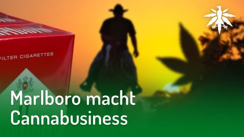 Marlboro macht Cannabusiness | DHV-News #187