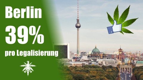 CDU fragt, Berlin antwortet: 39 % für Legalisierung! | DHV News #52