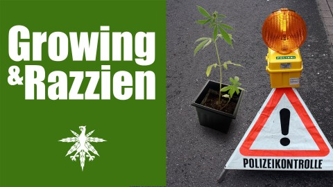 Growing in Kirchlinteln und Alaska | Razzien in Hamburg | DHV News #90