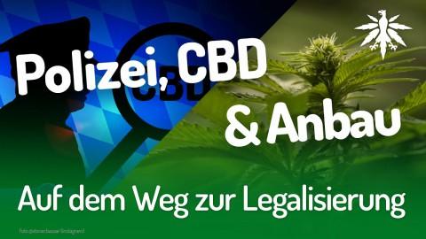 Auf dem Weg zur Legalisierung | DHV-News #203