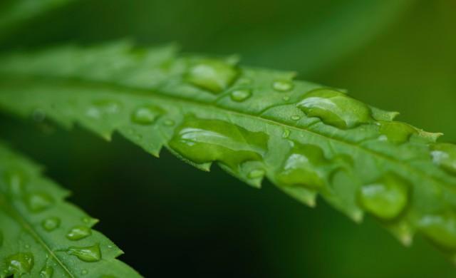 rain_drops_leaf-2.jpeg?itok=IEsMgf3q